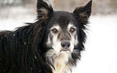 image for November is Adopt a Senior Pet Month