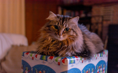 image for Holiday Gift Ideas for Your Pets