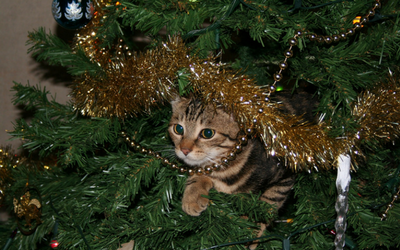 image for Keeping the Holidays Happy and Safe with Your Pets
